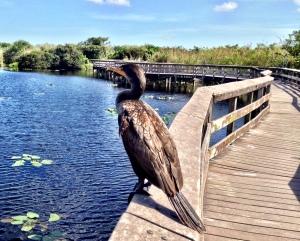 Fågel vid Everglades
